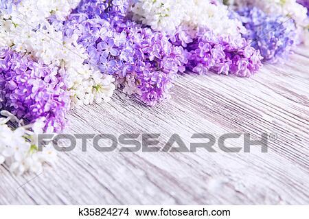 Lilas Fleur Bois Fond Fleurs Rose Couleur Fleurs Banque De
