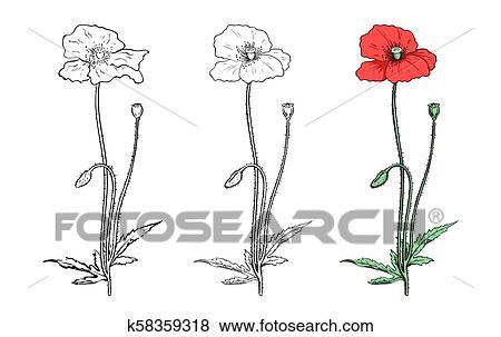 Clip Art Of Poppy Flower Twigs Set K58359318 Search Clipart