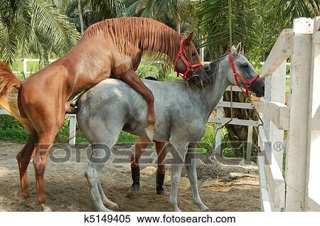 交尾 馬 の