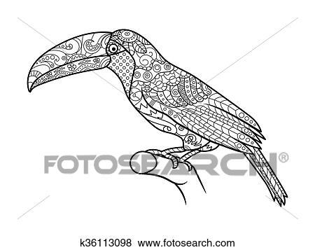 Clip Art - tukan, ausmalbilder, für, erwachsene, vektor k36113098 ...