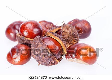 Stock Fotografie Früchte Von Kastanien In Trocken Schale