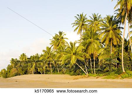 Turtle Beach Tobago Stock Photography