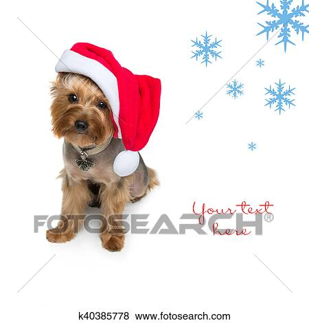 Stock Illustration Of Yorkshire Terrier Dog In Christmas Cap