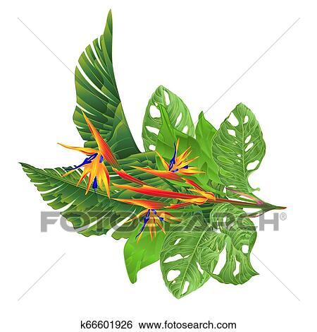 Strelitzia Reginae And Tropical Leaves Vector Clip Art K66601926 Fotosearch This high energy tropical flower painting, titled tropicana will jazz up any decor. tropical leaves vector clip art