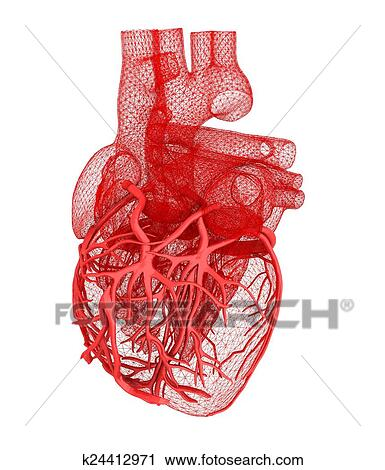 Banco de Fotografías - corazón humano k24412971 - Buscar fotos e ...