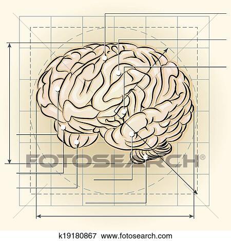 Gehirn Landkarte Clip Art K19180867 Fotosearch