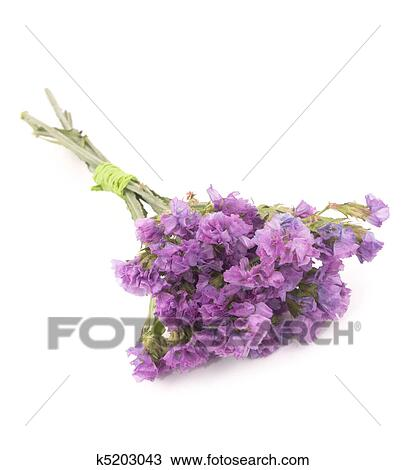 Stock photo of statice flowers limonium sinuatum k5203043 search small bouquet of pink statice flowers on white background mightylinksfo