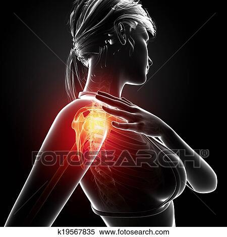 Stock Illustration Of Anatomy Of Female Shoulder Pain K19567835