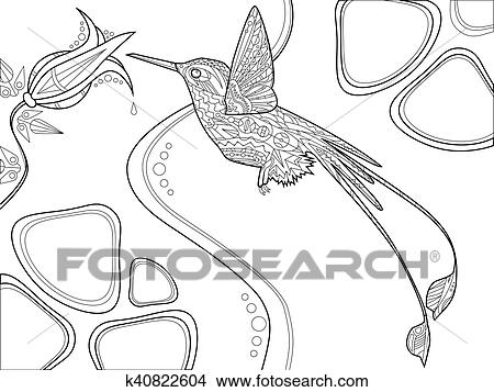 Hummingbird coloring book for adults vector Clipart ...