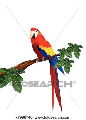Latina veľké vtáky