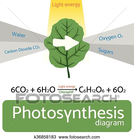 Clipart Of Photosynthesis Diagram Schematic Vector Illustration Of