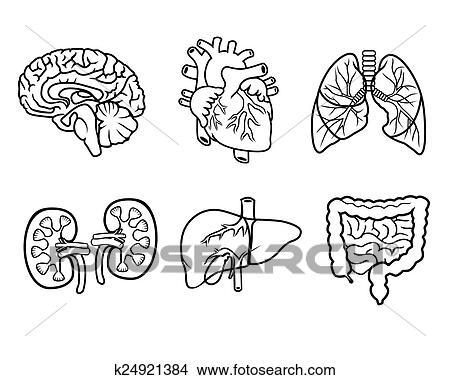 Kresby Anatomie Organy K24921384 Hledat Klipartove Ilustrace