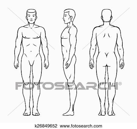 Corpo Masculino Vetorial Ilustracao Clipart K26849652 Fotosearch