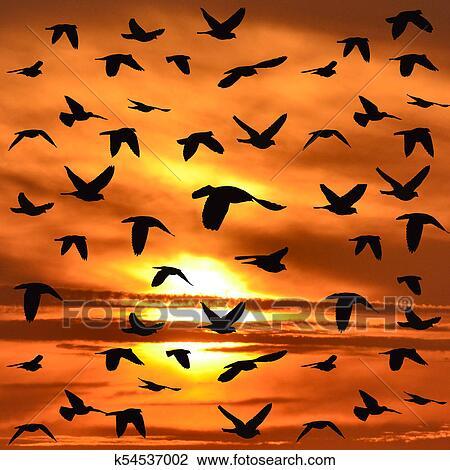 قطيع الطيور رحلة جوية الرسم K54537002 Fotosearch