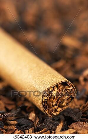 葉巻き, そして, タバコ 写真館、イメージ館 | k5342408 | Fotosearch