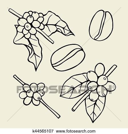 Coffee branch Plant Clip Art | k44565107 | Fotosearch