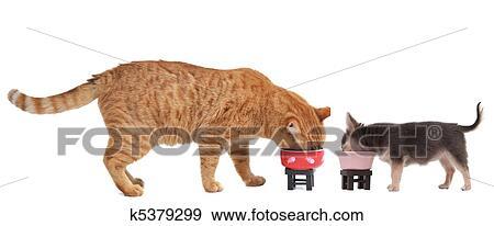 Chihuahua Cucciolo E Gattino Rosso Ara Mangiare Loro Pasto