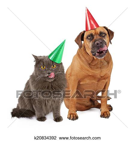 Stock Photo Of Dog And Cat Wearing Birthday Hat Licking Lips