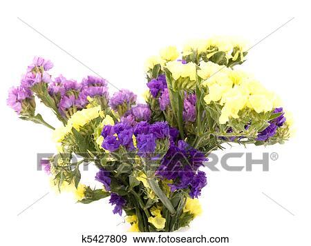 Stock photograph of statice flowers limonium sinuatum k5427809 bouquet of beautiful statice flowers on white background mightylinksfo