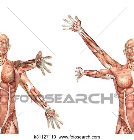 Stock Illustrationen - 3d, männlich, medizinische, figur ...
