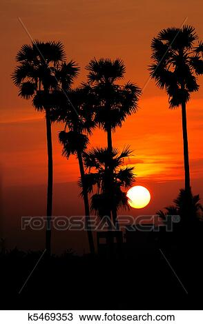 Beautiful Sun Rising Thru The Palm Trees Stock Photo K5469353