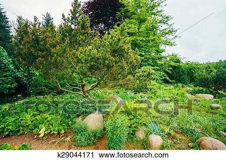 Jardin, landscaping, design., plate-bande, arbres verts, et, buissons, dans  Banque d\'Image