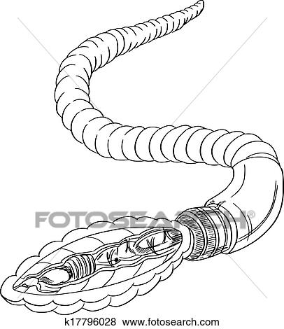 Clip Art Of Earthworm Anatomy Outline K17796028 Search Clipart
