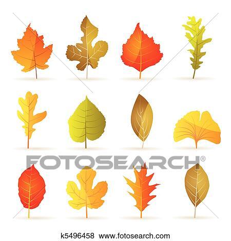 Clip Art - verschieden, arten, von, baum, herbst- blatt k5496458 ...