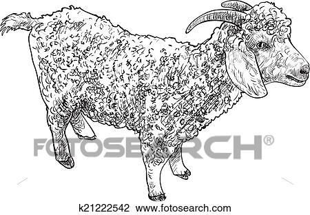 Angora Goat Royalty Free Cliparts, Vectors, And Stock Illustration. Image  10402728.