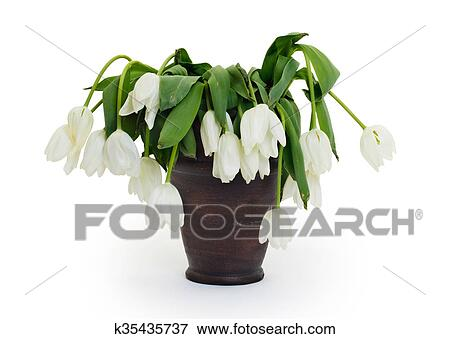 Picture Of Vase Full Of Droopy And Dead Flowers K35435737 Search