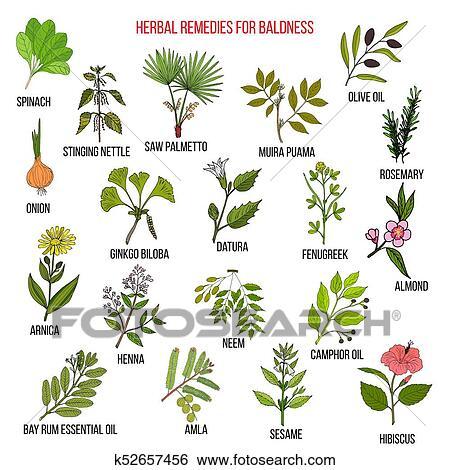 Erbaceo, rimedi, per, baldness., mano, disegnato, vettore, set, di,  medicinale, piante