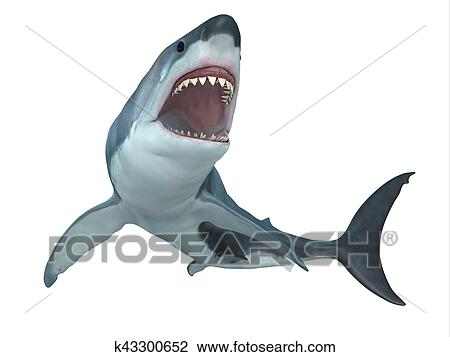 Clip art gran squalo bianco da sotto k43300652 cerca for Disegno squalo bianco