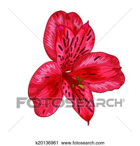 Clipart of beautiful red alstroemeria flower isolated on white beautiful red alstroemeria flower isolated on white background hand drawn with effect of drawing in watercolor mightylinksfo