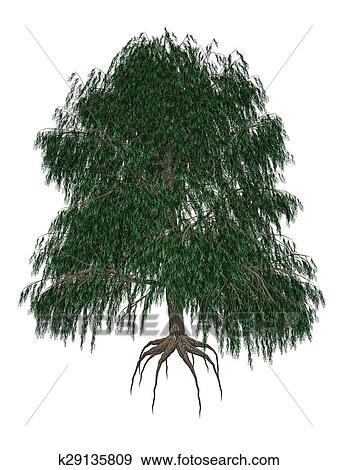 Babylon あるいは 枝垂れ柳 Salix Babylonica 木 3d