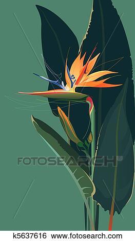 Clipart Oiseau Paradis Fleur K5637616 Recherchez Des Cliparts