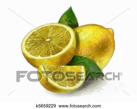 Limone limoni con foglie archivio illustrazioni k