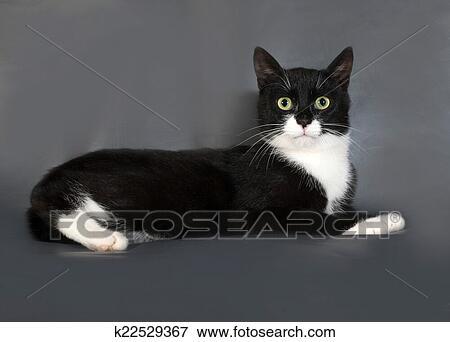 c03f8f6d Svart/hvitt-katt, med, grønne øyne, liggende, på, grå Arkivfoto ...