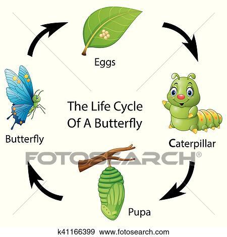 ال التعريف دورة الحياة بسبب أداة تعريف إنجليزية غير معروفة شخص