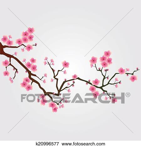 桜の木 花 イラスト K20996577 Fotosearch
