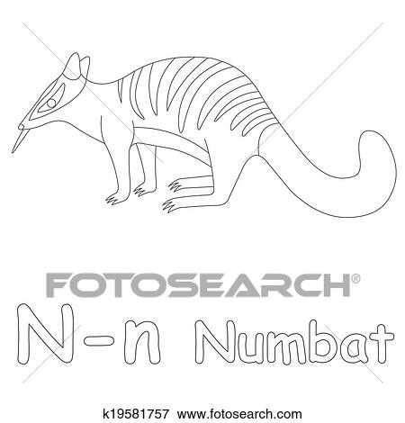 N For Numbat Coloring Page