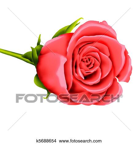 drawings of single pink rose k5688654 search clip art