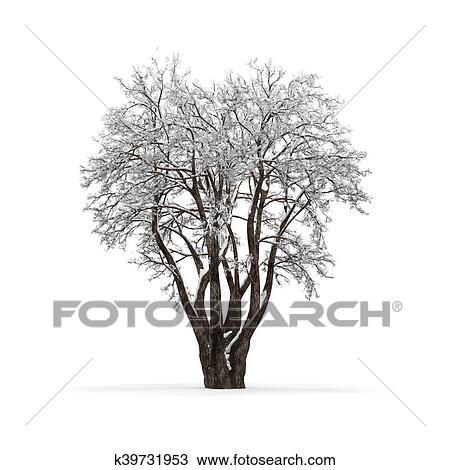 árbol Invierno Sin Hojas Blanco Plano De Fondo 3d