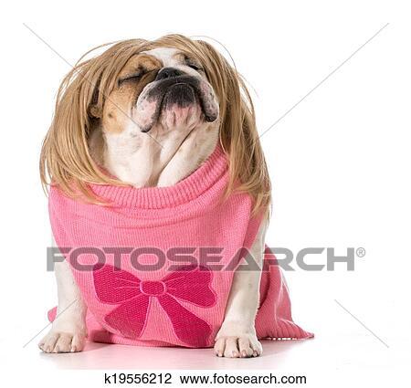 Hond Met Houding Female Engels Bulldog Vervelend