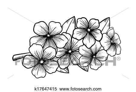 Amazing Branch Of A Blossoming Tree In Graphic Black White Style, Drawing By Hand.  Symbol Of Spring
