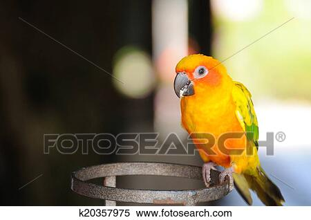 Beautiful cute Red-breasted Parakeet  Stock Illustration
