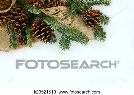 Christmas Tree White Background.Christmas Tree Branches Pine Cones And Burlap Border White Bac Stock Image