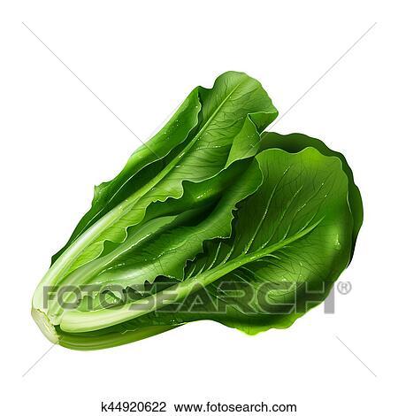 Salade Verte Blanc Fond Dessin