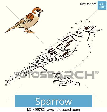 Clipart - haussperling, vogel, lernen, zeichnen, vektor k31499783 ...