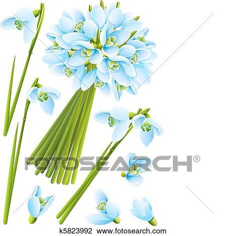 Clipart Frühling Schneeglöckchen Blumen K5823992 Suche Clip