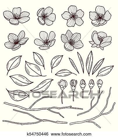 Clip Art Conjunto De Hermoso Cerezo Flores Aislado En Wite